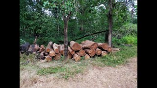BreakingNews | One arrested for illegally cutting wood from Kalay forest worth Rs 4 lakh