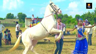 Rajasthani Dj Wedding Song 2020   देवरिया की शादी में    Latest Rajasthani Song 2020   Maina