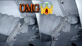 OMG!! Try to watch till end defiantly its shocks you | Cheetah and Dog Video