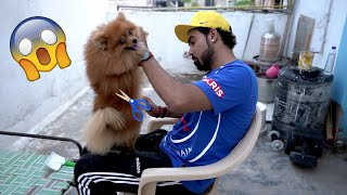 Cutting Hair Of World's Smallest Dog In Home ???? | *Gone Wrong*