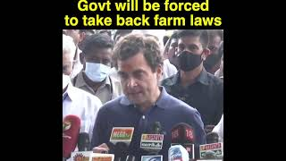 Mark my words, take it from me, these laws, the govt will be forced to take them back: Rahul Gandhi