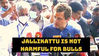 Jallikattu Is Not Harmful For Bulls: Rahul Gandhi | Catch News