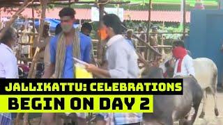 Jallikattu: Celebrations Begin On Day 2 | Catch News