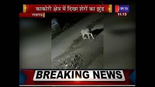 Lucknow UP News | Kakori क्षेत्र में दिखा शेरो का झुण्ड, गाँव वालो में दहशत - Video Viral
