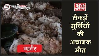 सैकड़ों मुर्गियों की अचानक मौत