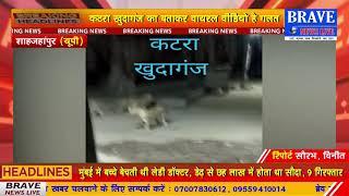 कटरा-खुदागंज का बताकर वायरल शेर के वीडियो का सच आया सामने, शेर की अफवाह से फैली दहशत- #BraveNewsLive