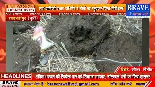 कटरा: शेर द्वारा बछड़े के शिकार की सूचना से हड़कम्प, ग्रामीणों में फैली दहशत, सा0वा0वि0 ने बताया अफवाह