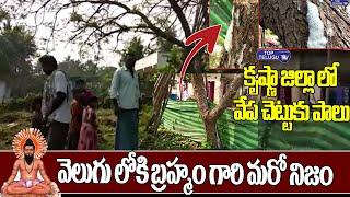 వేప చెట్టుకు పాలు..వెలుగు లోకి బ్రహ్మం గారి మరో నిజం | Milk to the Neem Tree | Top Telugu TV