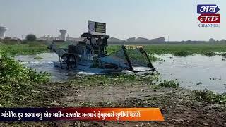 નદી, ડેમમાંથી ગાંડી વેલ દૂર કરવાની કામગીરી પુરજોશમાં  | ABTAK MEDIA