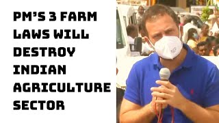 PM's 3 Farm Laws Will Destroy Indian Agriculture Sector: Rahul Gandhi | Catch News