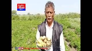 સુલતાનપુર ના ખેડૂત દ્વારા પ્રાકૃતિક બટેટાની ખેતી કરાય