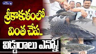 శ్రీకాకుళంలో వింత చేప..| Strange fish in Srikakulam | Viral News | Top Telugu TV