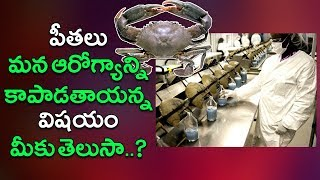 Telugu Facts I Unknown Facts I CrabS Can Help To Cure Diseases I Crab I RECTV INFO