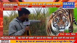 शाहजहांपुर: क्षेत्र में बाघ की दहशत बरकरार, 23 दिन बाद भी सा0वा0 प्रभाग टीम के हाथ खाली