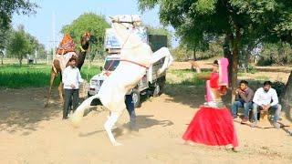 New Dj Rasiya || अब तू बैठ गाड़ी में - Ab Tu Baith Gaali me || Maina