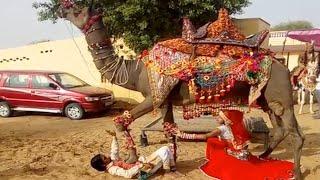 New Dj Rasiya 2021 | राजा ससरिया में ले जा | Latest Rajasthani Song | Maina