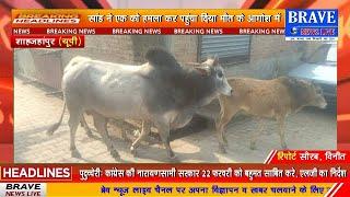 #Katra : नगर में सांडों का आतंक, कई को किया घायल, एक मौत के आगोश में | #BraveNewsLive