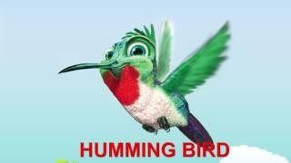 Finger Family Nursery Rhymes | HUMMING BIRD | Bird Finger Family Songs Collection For Kids