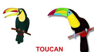 Finger Family Nursery Rhymes | TOUCAN | English Nursery Rhymes For Kids
