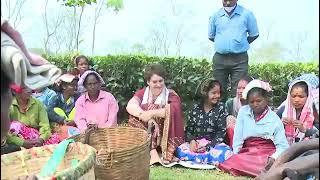 Smt. Priyanka Gandhi interact with tea tribes from Sadharu Tea Estate, Biswanath in Assam