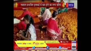 Chatra News | नक्सल प्रभावित इलाकों में कम होने का लगा खौफ,अफीम की गंध खत्म कर फैली गैंदा फूल की महक