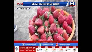 Jamnagar: ખેડૂત વિશાલભાઈ જેસડીયાએ સ્ટ્રોબેરી, ઝુકી તેમજ બ્રોકલીનું કર્યું ઉત્પાદન