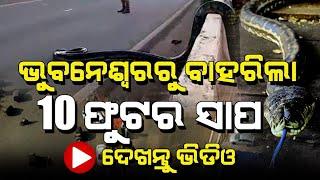 Big Snake Rescued in Bhubaneswar | #Shorts | Satya Bhanja