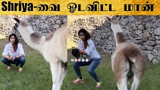 Actress Shriya-வை ஓடவிட்ட மான் | Deer hit Shriya Saran Full Video | Shriya Saran Andrei Koscheev