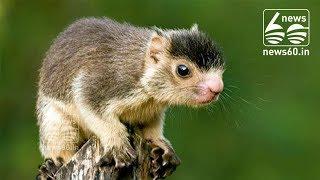 Grizzled Squirrel Wildlife Sanctuary