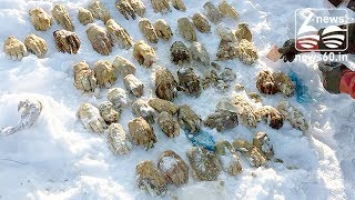 Severed human hands are found dumped in Russia