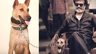 Mani: the star dog with super star Rajani kanth