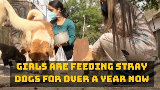 These Udhampur Girls Are Feeding Stray Dogs For Over A Year Now | Catch News