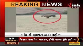 Madhya Pradesh News || Panna, टाइगर रिजर्व के विक्रमपुर में बाघिन ने डाला डेरा