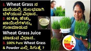 How to grow Wheatgrass easily at home   Uses of Wheatgrass juice in Kannada   Kannada Sanjeevani