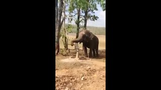 ???? Female elephant pumps tube well to drink water ???? #Shorts