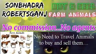 Sonbhadra Robertsganj :- Buy & Sale Farm Animals ♧ Cow, Buffalo- घर बैठें गाय भैंस खरीदें बेचें