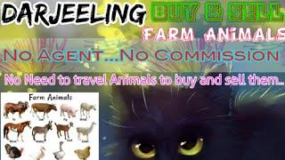 Darjeeling :- Buy & Sale Farm Animals ♧ Cow, Buffalo, Sheeps- घर बैठें गाय भैंस खरीदें बेचें..