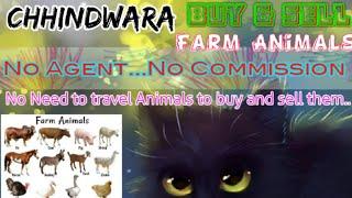 Chhindwara :- Buy & Sale Farm Animals ♧ Cow, Buffalo, Sheeps- घर बैठें गाय भैंस खरीदें बेचें..