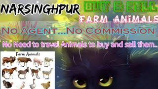 Narsinghpur :- Buy & Sale Farm Animals ♧ Cow, Buffalo, Sheeps- घर बैठें गाय भैंस खरीदें बेचें..