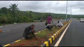 Canaconkar's plant tree's on dividers, Planting tree's was actually the work of contractor