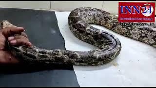 Santosh Sarthi rescue Snake in kusmunda korba