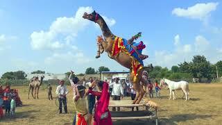रोई रई पतली सी नार - Roi Rai Patli Si Naar | Vid Evolution Rajasthani