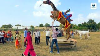 छज्जे ऊपर बोयो री यबाजरो खिल गयो फूल चेमेली को    Chajje upar Boyo Ri Bajro khil by Bhawar Khatana