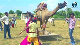 Full Gurjar Rasiya Dj Song   डिस्को बीबी लायो - Disko Bobob Layo   Latest Rajasthani Song