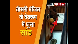 Viral Video :तीसरी मंजिल के बेडरूम में घुसा सांड ।। Newsfirst.tv