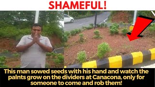 Man sows seeds with his hands on the dividers at Canacona, only for someone to come and rob them!