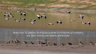 Film on Migratory Birds at NTPC Bongaigaon (08.05.2021)