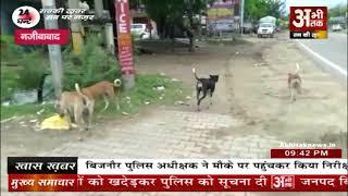 आवारा कुत्तों का आतंक, लोगों में दहशत