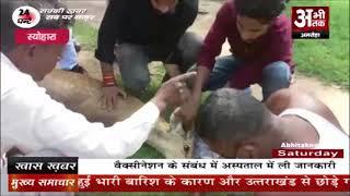 बारह सिंघा को कुत्तों ने किया घायल