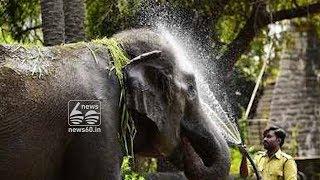 Elephant Rani celebrating her 80th birthday in Nehru zoological park
